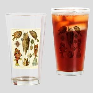 Acanthostracion quadricornis Drinking Glass