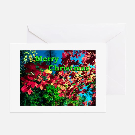 Oak Creek Fall Maple Leaves Holiday Greeting Cards