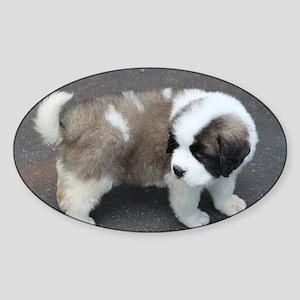 saint bernard puppy Sticker