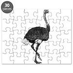 Ostrich Puzzle