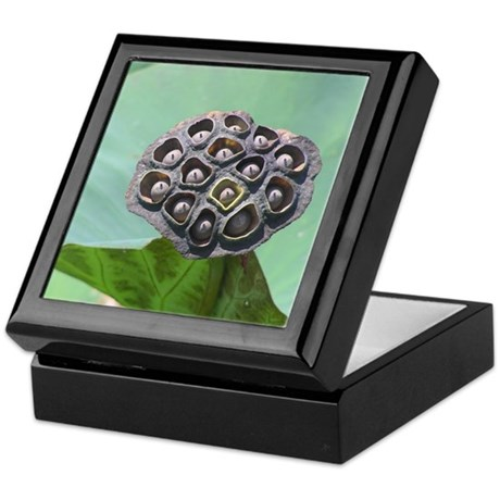 Seed Pod Keepsake Box