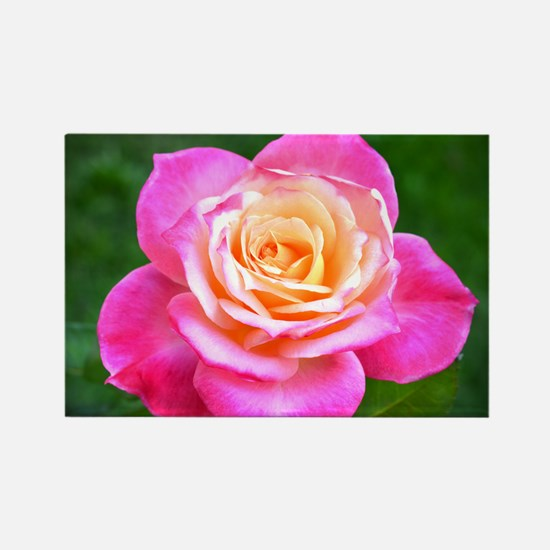 Pink Sunset Rose Rectangle Magnet