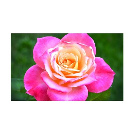 Pink Sunset Rose 35x21 Wall Decal
