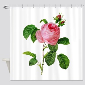 Pierre-Joseph Redoute Rose Shower Curtain
