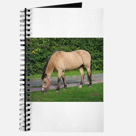 New Forest Pony Journal