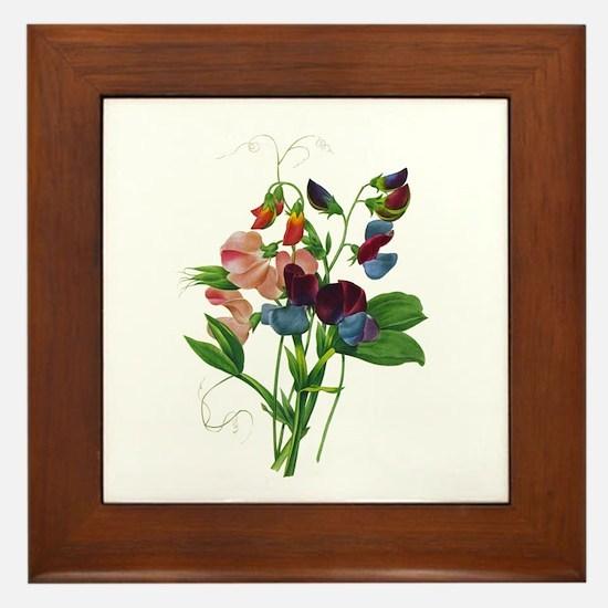 Pierre-Joseph Redoute Botanical Framed Tile