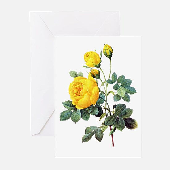 Pierre-Joseph Redoute Rose Greeting Cards (Pk of 1