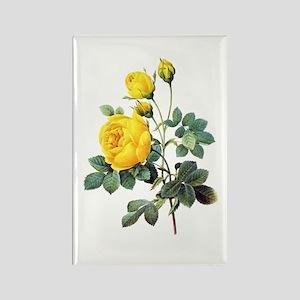 Pierre-Joseph Redoute Rose Rectangle Magnet