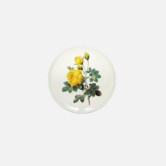 Pierre-Joseph Redoute Rose Mini Button