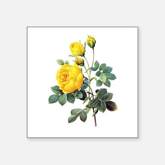 """Pierre-Joseph Redoute Rose Square Sticker 3"""" x 3"""""""