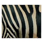Zebra Safari Decor King Duvet