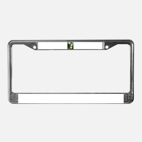 Columbines License Plate Frame