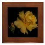 Yellow rose and bud Framed Tile