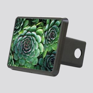 'Hens and chicks' succulents - Hitch Cover