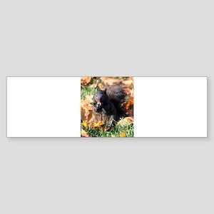 Squirrel Eating Sticker (Bumper)