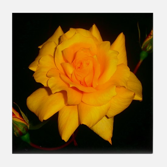 Yellow rose Tile Coaster