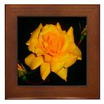 Yellow rose Framed Tile