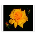 Yellow rose Small Poster