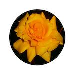 Yellow rose 3.5
