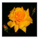 Yellow rose Square Car Magnet 3