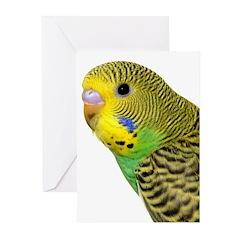 Parakeet 2 Steve Duncan Greeting Cards (Pk of 20)