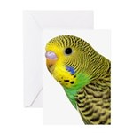 Parakeet 2 Steve Duncan Greeting Card