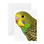 Parakeet 2 Steve Duncan Greeting Cards (Pk of 10)