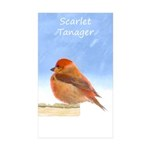 Scarlet Tanager Sticker (Rectangle 50 pk)