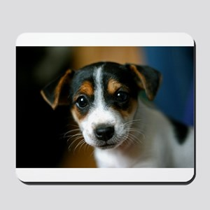 Cute Jack Russell Terrier Puppy Mousepad