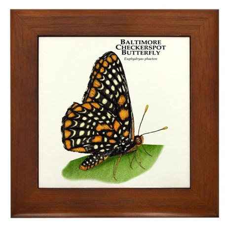 Baltimore Checkerspot Butterfly Framed Tile by WildlifeArts2