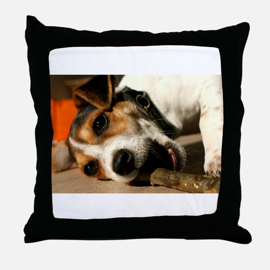 Jack Russell Terrier Puppy Chewing Stick Throw Pil