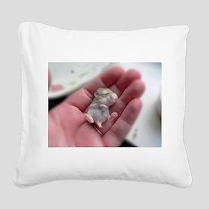 Adorable Sleeping Baby Hamster Square Canvas Pillo