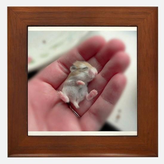 Adorable Sleeping Baby Hamster Framed Tile
