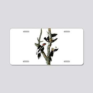 Ivory Billed Woodpeckers Aluminum License Plate