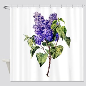 Lilac Drawn From Nature Shower Curtain