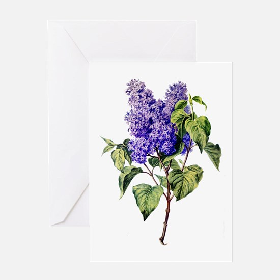 Lilac Drawn From Nature Greeting Card