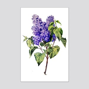 Lilac Drawn From Nature Mini Poster Print