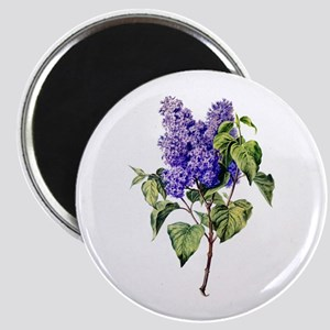 Lilac Drawn From Nature Magnet