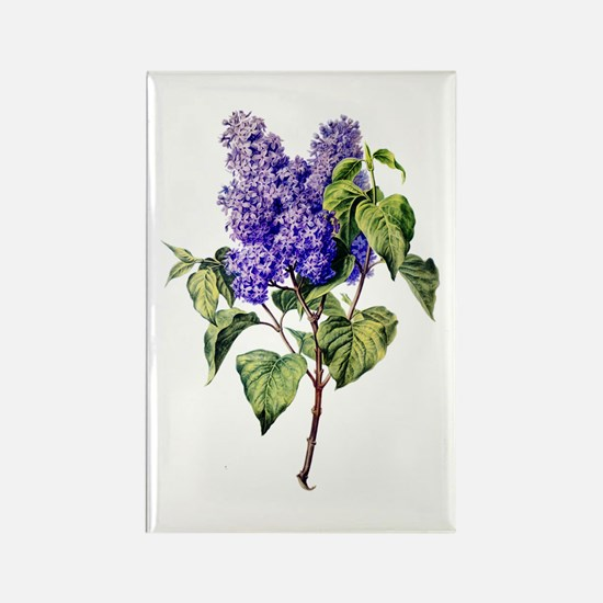 Lilac Drawn From Nature Rectangle Magnet