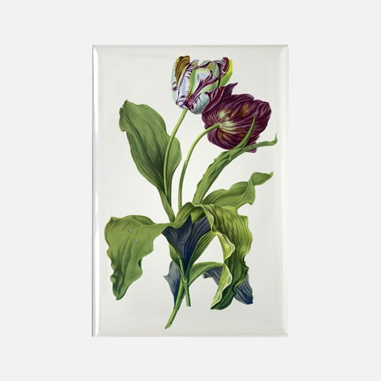 Tulips Drawn From Nature Rectangle Magnet
