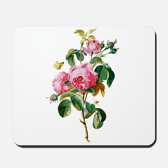 Cabbage Rose Drawn From Nature Mousepad
