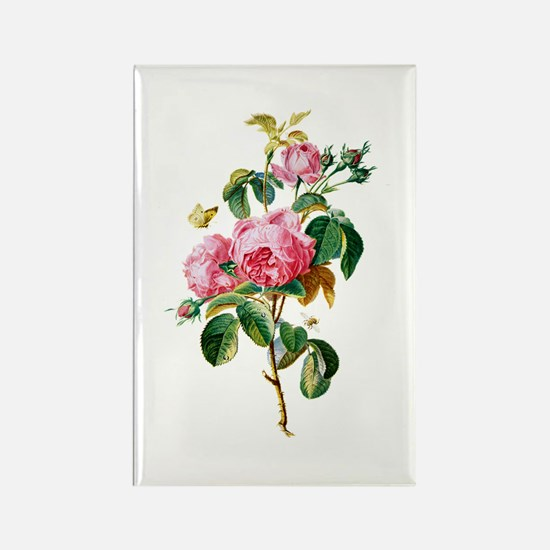 Cabbage Rose Drawn From Nature Rectangle Magnet