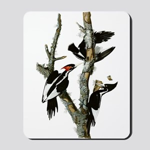 Ivory Billed Woodpeckers Mousepad