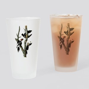 Ivory Billed Woodpeckers Drinking Glass