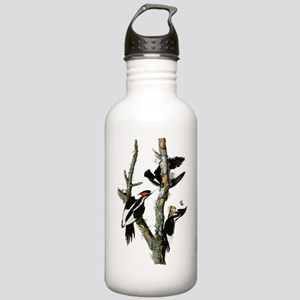 Ivory Billed Woodpeckers Stainless Water Bottle 1.