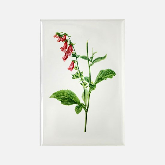 Foxglove Drawn From Nature Rectangle Magnet