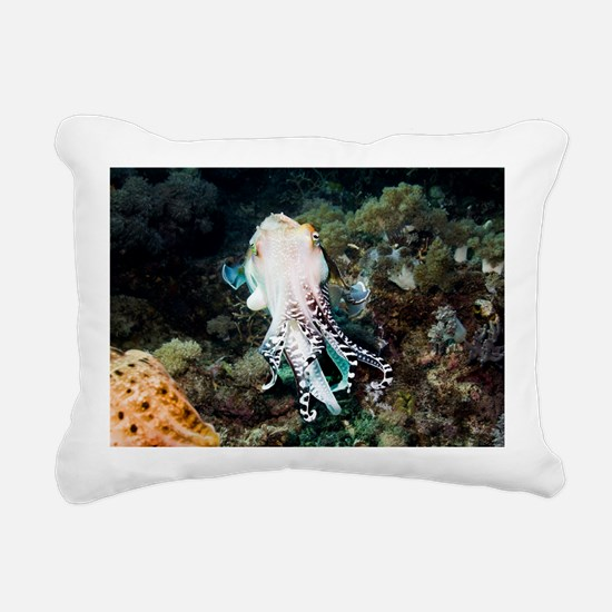 Broadclub cuttlefish male - Pillow