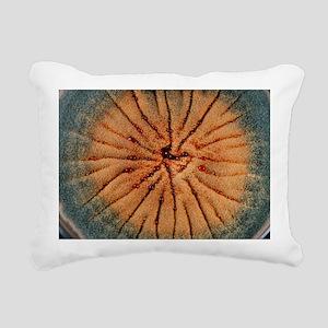 Culture of Aspergillus nidulans fungus - Pillow