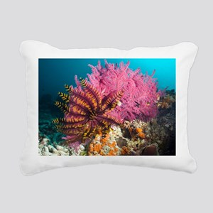 Featherstar on gorgonian coral - Pillow