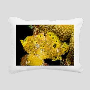 Longlure frogfish - Pillow